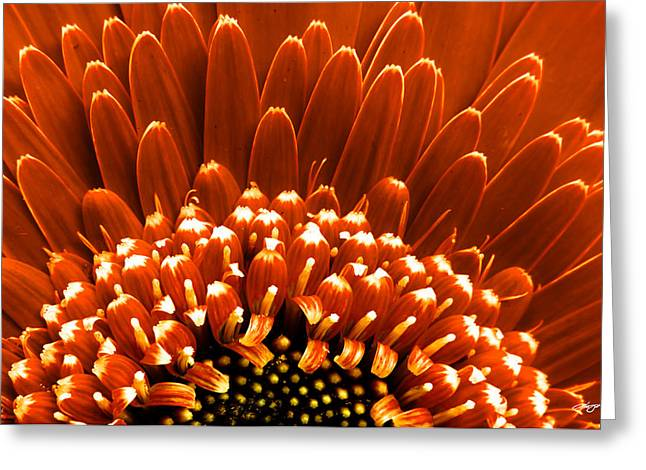 Barberton Daisy Greeting Cards - Stardust Greeting Card by Alejandro Reyna