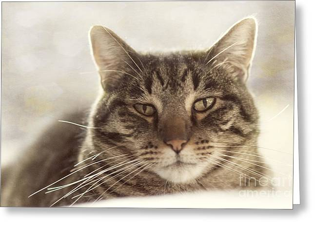 Head Shot Greeting Cards - Stare into my eyes Greeting Card by Juli Scalzi