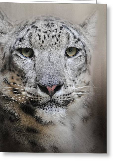Wildcats Greeting Cards - Stare Of The Snow Leopard Greeting Card by Jai Johnson