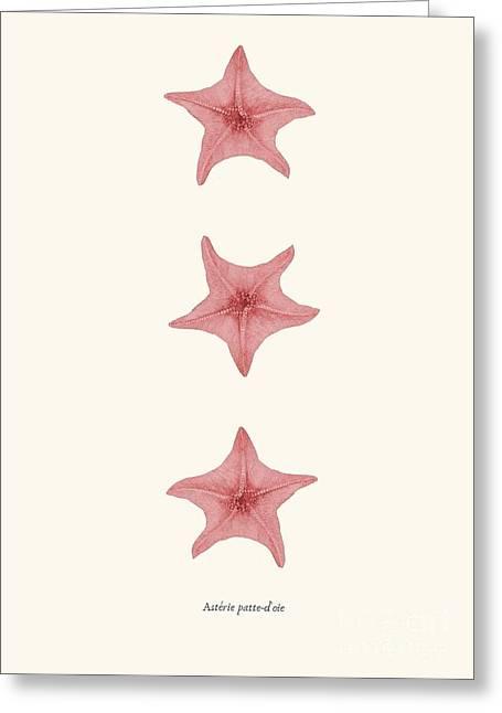 Seastar Drawings Greeting Cards - Starfih pink sea vintage Greeting Card by Patruschka Hetterschij