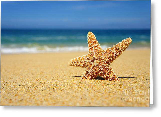 Starfish Greeting Cards - Starfish Greeting Card by Aged Pixel