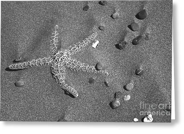 Agate Beach Oregon Greeting Cards - Starfish and Cobbles Greeting Card by Donald Sewell