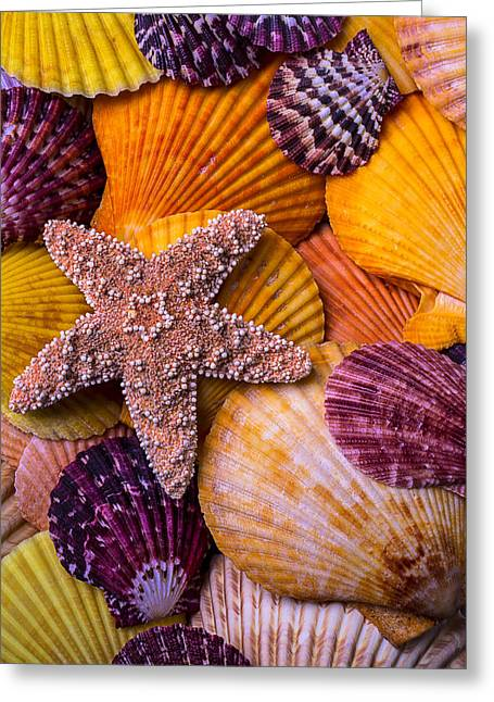 Starfish Greeting Cards - Starfish and Colorful Shells Greeting Card by Garry Gay