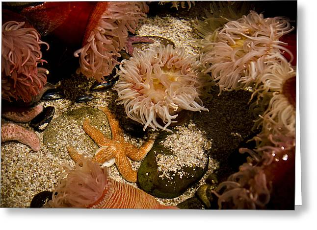 Snorkel Greeting Cards - Starfish and Coral Greeting Card by Jessica Berlin