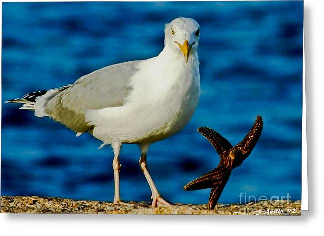 Offense Digital Art Greeting Cards - Starfish and Seagull Dance on the Rocks Greeting Card by Carol F Austin
