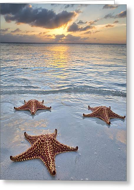 Star Points Greeting Cards - Starfish Beach Sunset Greeting Card by Adam Romanowicz