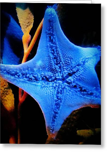 Undersea Photography Greeting Cards - Starfish Greeting Card by Dan Sproul