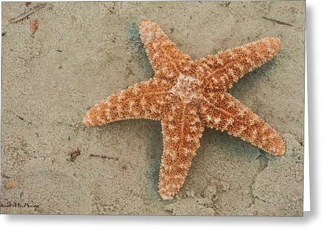 Star Fish Pyrography Greeting Cards - Starfish Greeting Card by Donna MacPherson