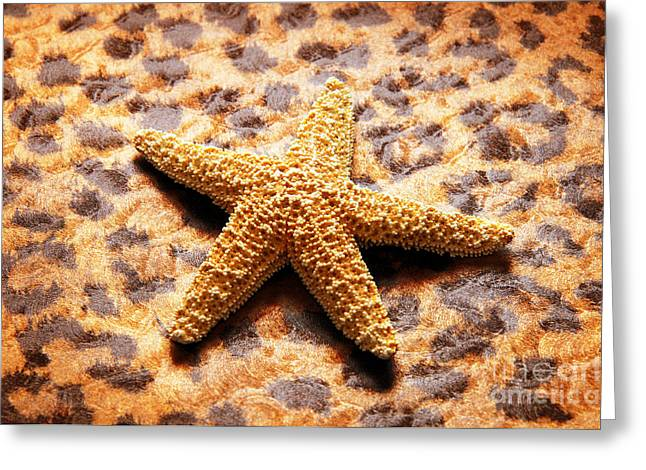 Shell Texture Greeting Cards - Starfish Enterprise Greeting Card by Andee Design
