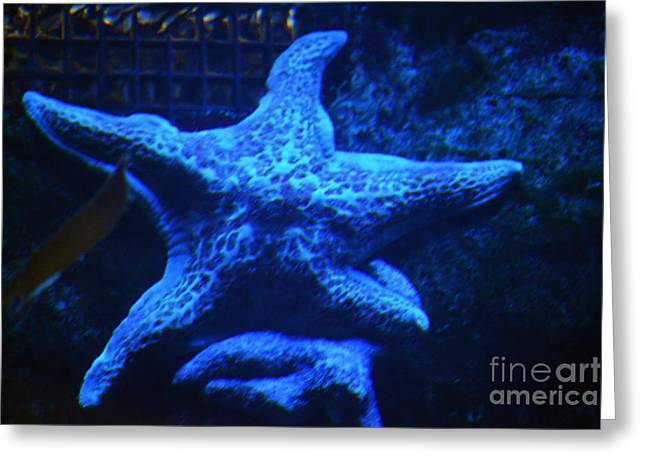Starfish In Water Greeting Cards - Starfish in Blue Greeting Card by Shawn O