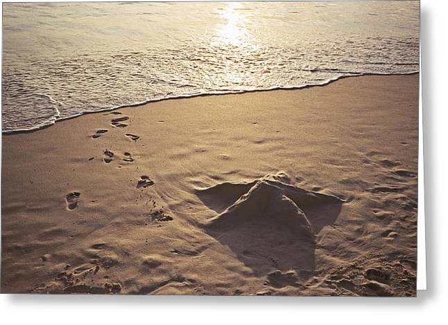 Foam Sculpture Greeting Cards - Starfish In The Sand Greeting Card by Christine Rivers