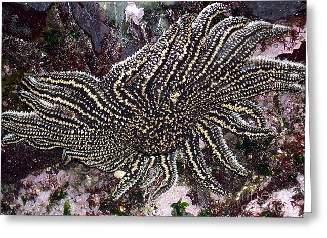 Starfish In Water Greeting Cards - Starfish Greeting Card by Maurizio Biso