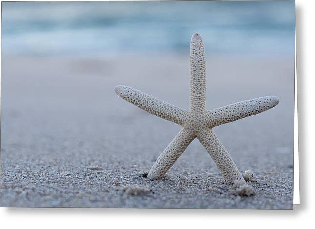 Fun New Art Greeting Cards - Starfish on Beach Seaside New Jersey Greeting Card by Terry DeLuco