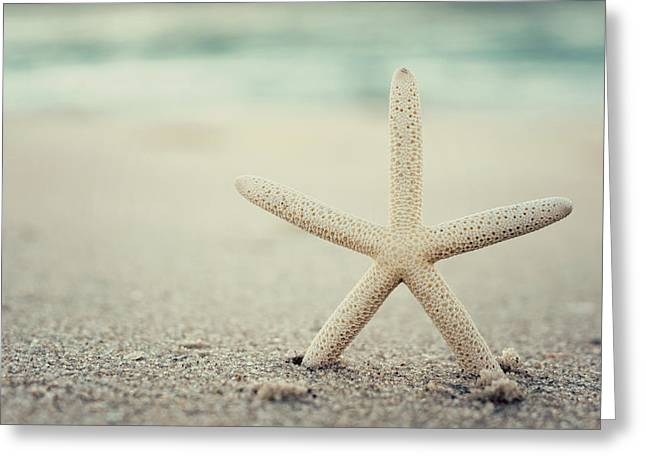 Recently Sold -  - Ocean Photography Greeting Cards - Starfish on Beach Vintage Seaside New Jersey  Greeting Card by Terry DeLuco