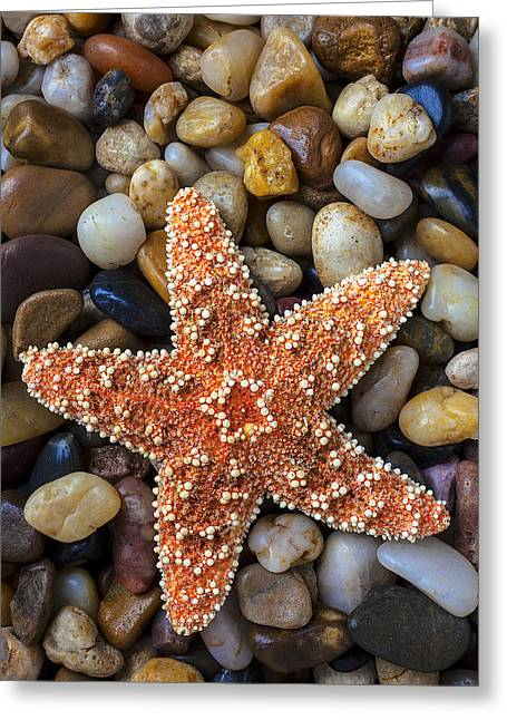 Sea Life Photographs Greeting Cards - Starfish on rocks Greeting Card by Garry Gay
