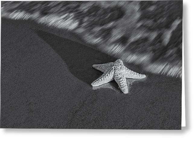 Marine Mollusc Greeting Cards - Starfish On The Beach BW Greeting Card by Susan Candelario