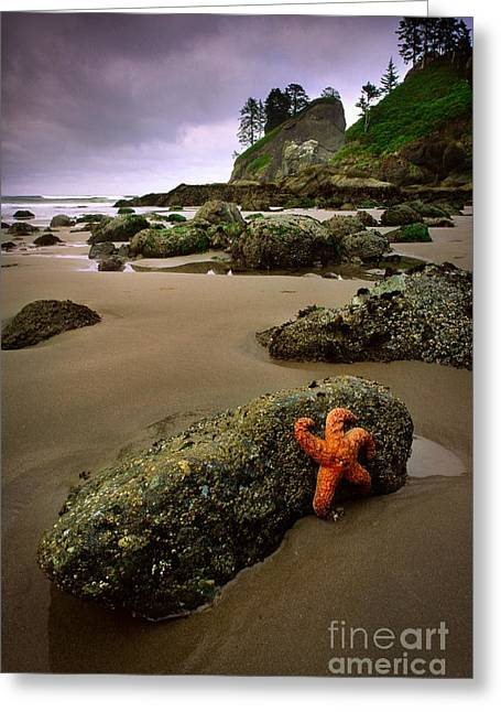 Beach Scenery Greeting Cards - Starfish on the Rocks Greeting Card by Inge Johnsson