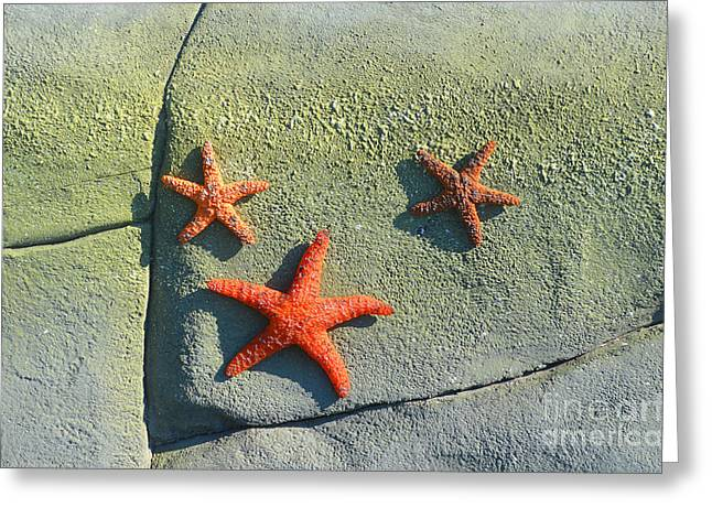 Fineartamerica Greeting Cards - Starfish on the Rocks Greeting Card by Luther   Fine Art