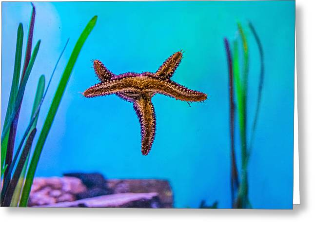 Sea Creature Photos Greeting Cards - Starfish Sit-up 2 Greeting Card by Steve Harrington