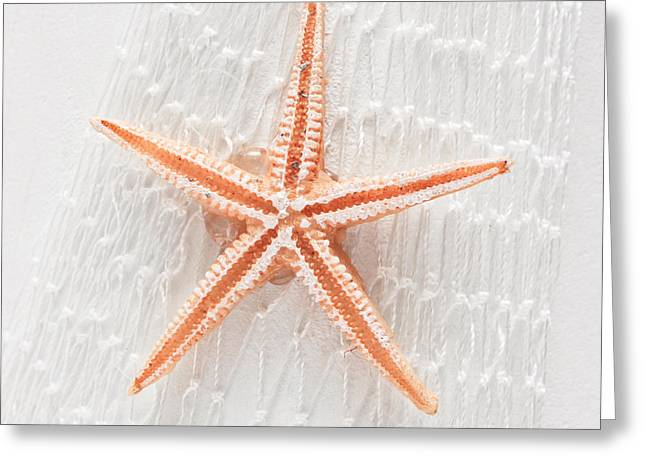 Decorative Fish Greeting Cards - Starfish Greeting Card by Tom Gowanlock