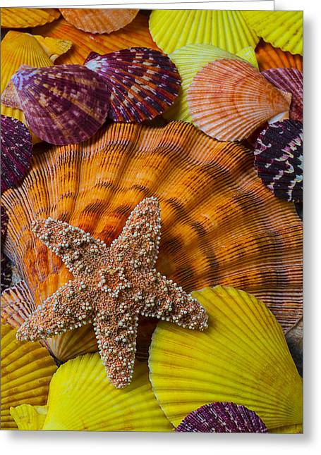 Aquatic Greeting Cards - Starfish with seashells Greeting Card by Garry Gay