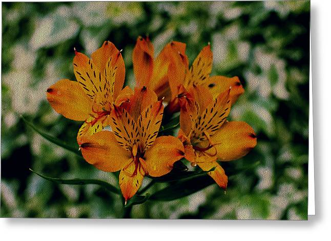 Lilium Stargazer Lily Greeting Cards - Stargazers Greeting Card by Marco Oliveira