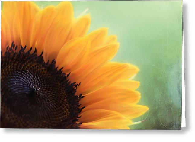 Sunflower Art Greeting Cards - Staring Into the Sun Greeting Card by Amy Tyler