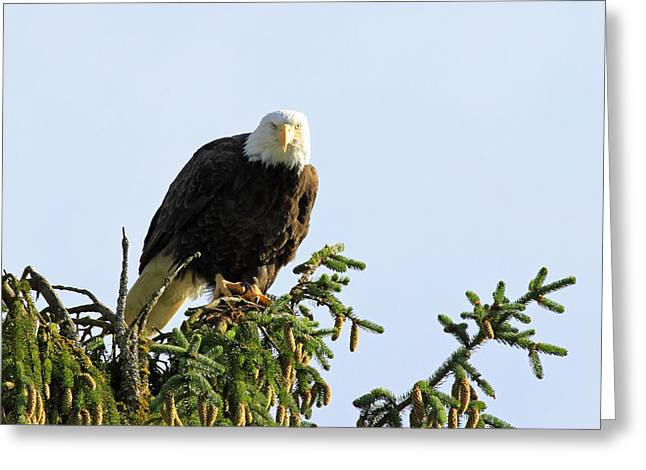 Eagle Pyrography Greeting Cards - Staring Me Down Greeting Card by Shoal Hollingsworth