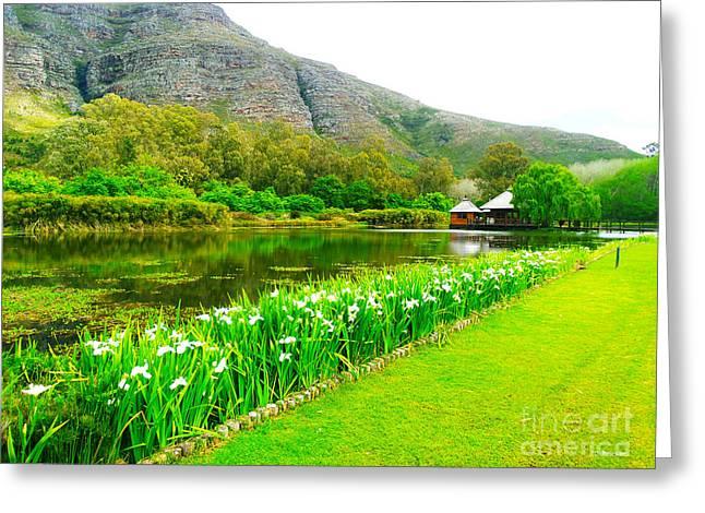 Stellenbosch Greeting Cards - Stark Conde Wine Estate Stellenbosch South Africa 3 Greeting Card by Charl Bruwer
