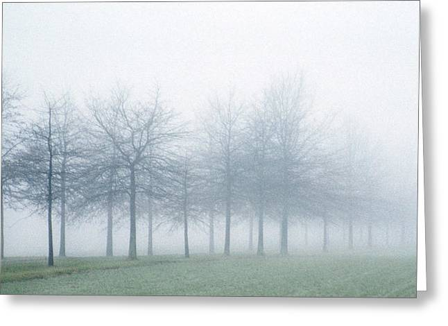 Photogaphy Greeting Cards - Stark Greeting Card by Skip Willits