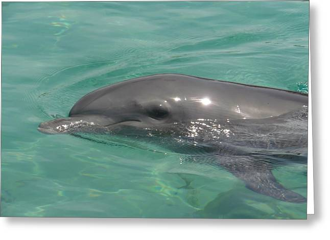 Starlett Greeting Cards - Starlett Dolphin Posing Greeting Card by Mary J Tait