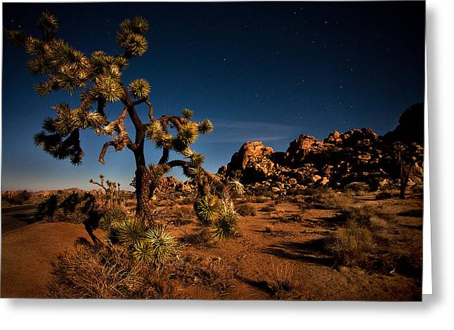 Locations Greeting Cards - Starlight and Moonlight at Joshua Greeting Card by Peter Tellone