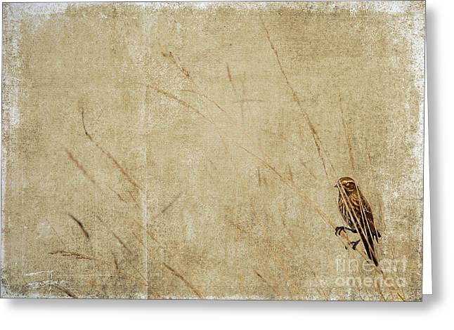 Oregon Photos Greeting Cards - Starling in the Reeds Greeting Card by Rebecca Cozart