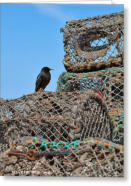Lobster Pot Greeting Cards - Starling on Lobster Pots Greeting Card by Louise Heusinkveld