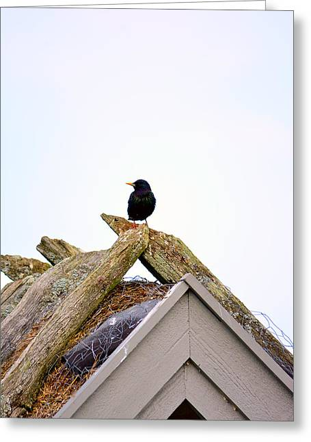 Cut-outs Mixed Media Greeting Cards - Starling on old house Greeting Card by Toppart Sweden