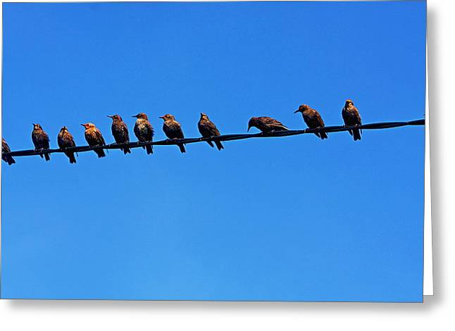 Hangout Greeting Cards - Starling Row Greeting Card by Aidan Moran