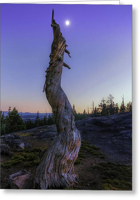 Ebbetts Pass Greeting Cards - Starry Moon Greeting Card by PhotoWorks By Don Hoekwater