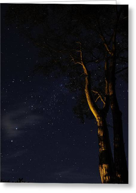 Henry Pyrography Greeting Cards - Starry Night Greeting Card by Henry Baskerville