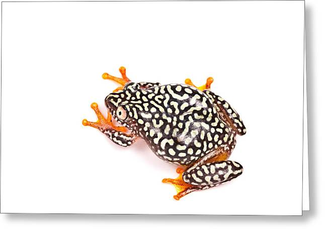 Starry Night Reed Frog Greeting Card by David Kenny