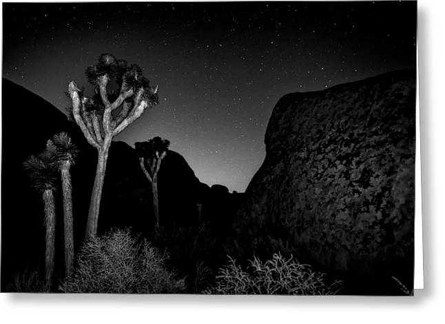 Featured Images Greeting Cards - Stars above Joshua Tree Greeting Card by Peter Tellone