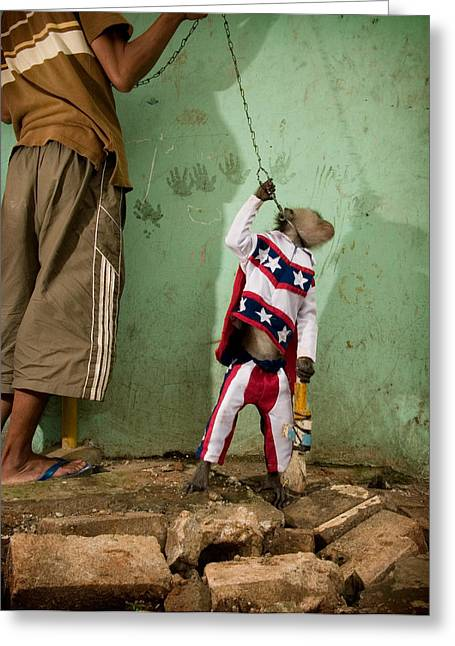 Performing Monkey Greeting Cards - Stars And Stripes Evel Knievel Style Greeting Card by Ubud High