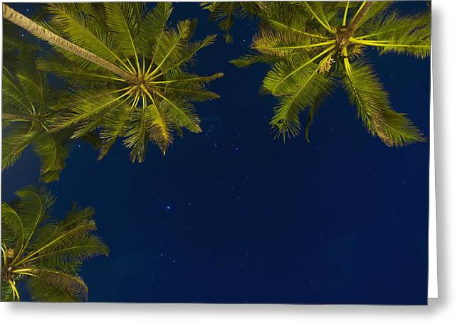 Simple Beauty In Colors Greeting Cards - Stars At Night With Palm Tree Thalpe Greeting Card by Ian Cumming