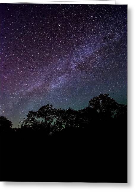 Backlit Prints Greeting Cards - Stars at the Hundred Acre Wood Greeting Card by David Morefield