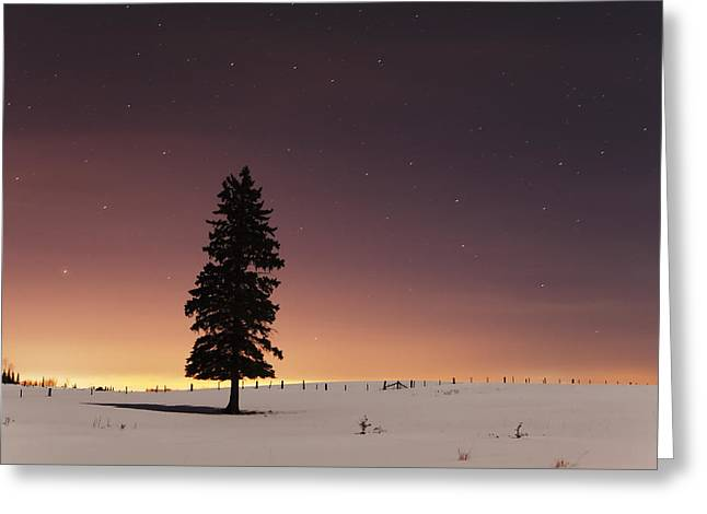 Moonlit Night Greeting Cards - Stars In The Night Sky With Lone Tree Greeting Card by Susan Dykstra