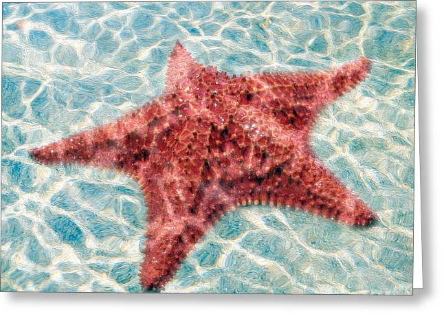 Starfish Greeting Cards - Stars in the Water Greeting Card by Jon Neidert