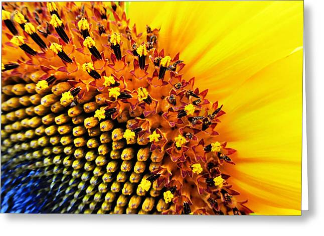 Nature Center Greeting Cards - Stars of The Sun Greeting Card by Marianna Mills