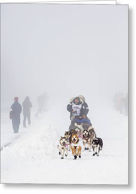 Sled Dog Greeting Cards - Starting in the Fog Greeting Card by Tim Grams