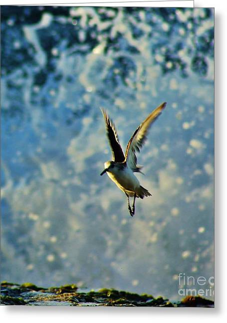 Seabirds Greeting Cards - Startled Shorebird Greeting Card by Craig Wood