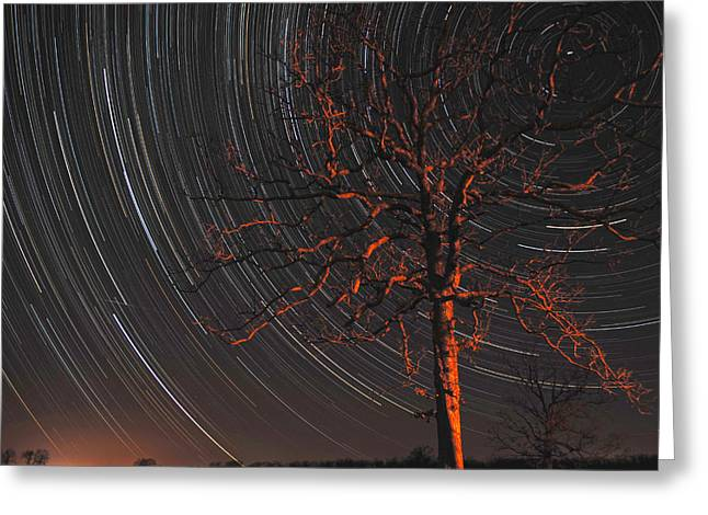 Startrails Digital Greeting Cards - Startree Greeting Card by Bob Crow