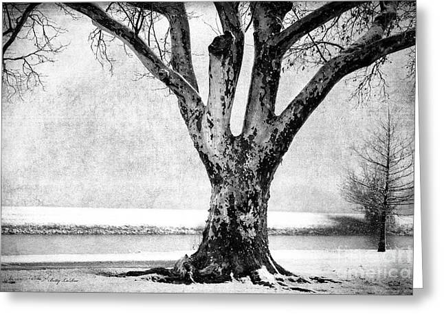 Old Tree Photographs Greeting Cards - Stately Greeting Card by Betty LaRue